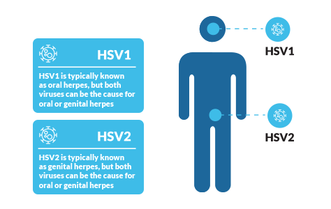 The differences between HSV1 and HSV2