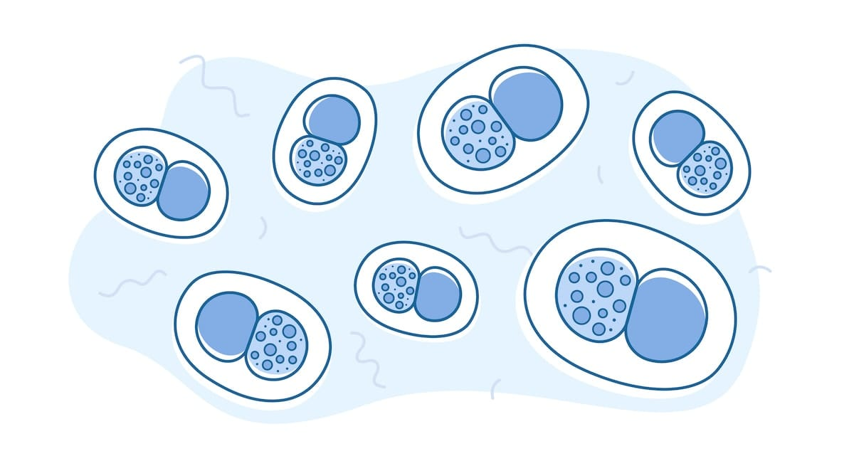 An illustration of the bacterial STD Chlamydia.